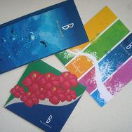 Brochures B pichilingue