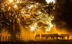 Horses shutterstock_247843162 copy 2