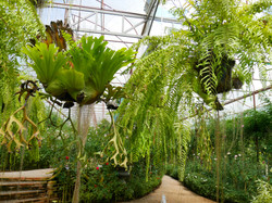 Hanging Ferns shutterstock_1050970070 co