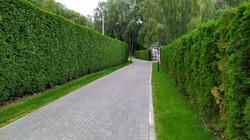 Hedgerows shutterstock_1475224544 copy