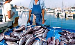 Fish Dock shutterstock_120127963 copy