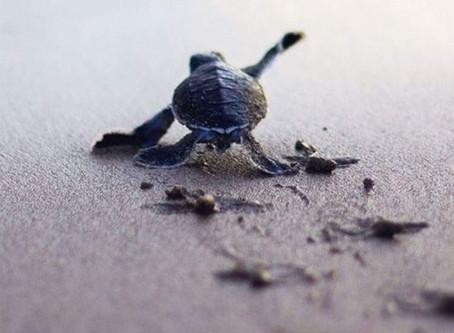 Tai Chi Challenge #10 - Persistence