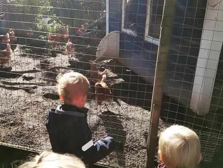 Høner og kaniner