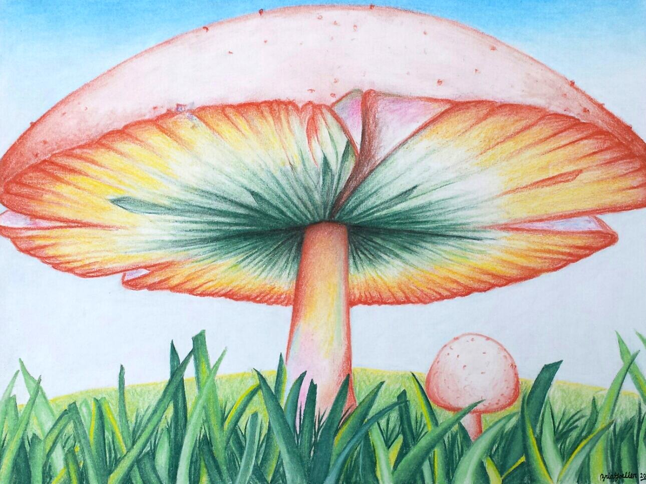 Mushroom (2014)