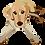 Thumbnail: Digital Pet Portrait