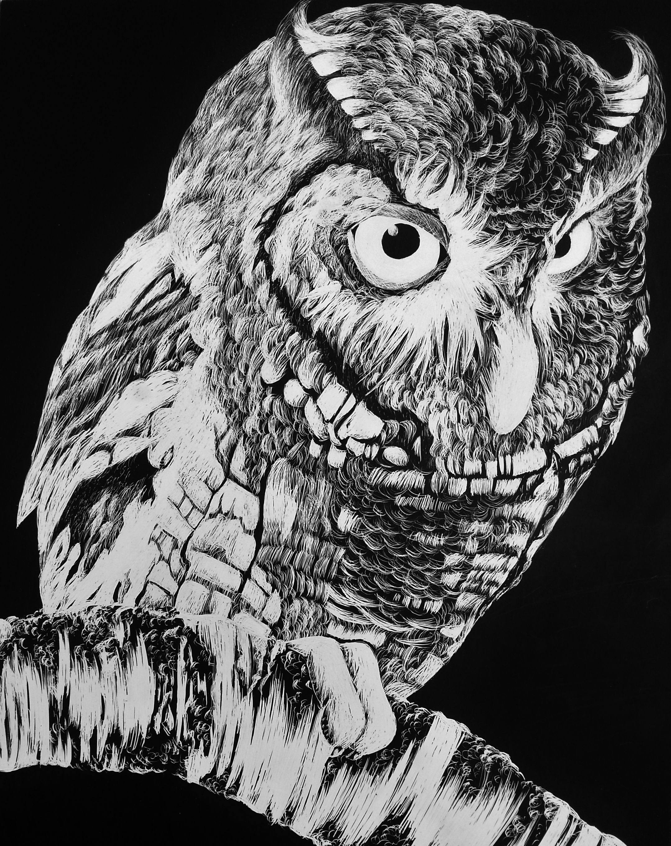 Owl (2014) - PRINTS AVAILABLE