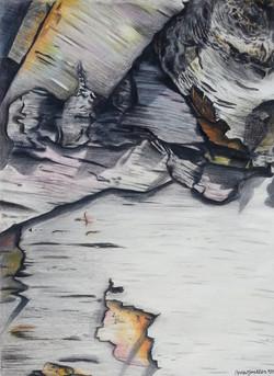 Birch Bark (2014)
