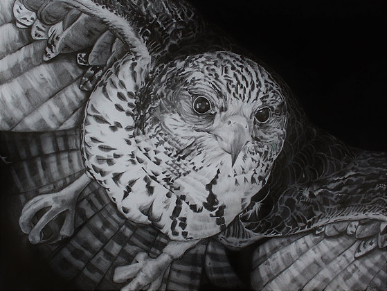 """Signed Print of """"Falcon"""""""