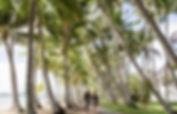 Palm Cove walkway