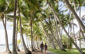 Palm Cove walkway
