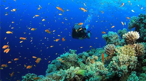 Reef tours