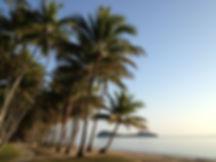 Palm Cove Beach Views
