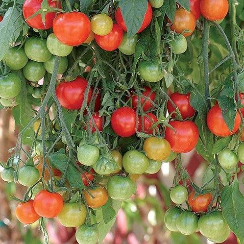 Tomato Trailing Tumbler
