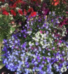 Photo 22-06-2015, 13 53 51_edited.jpg