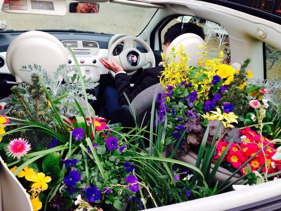 Flowery Car