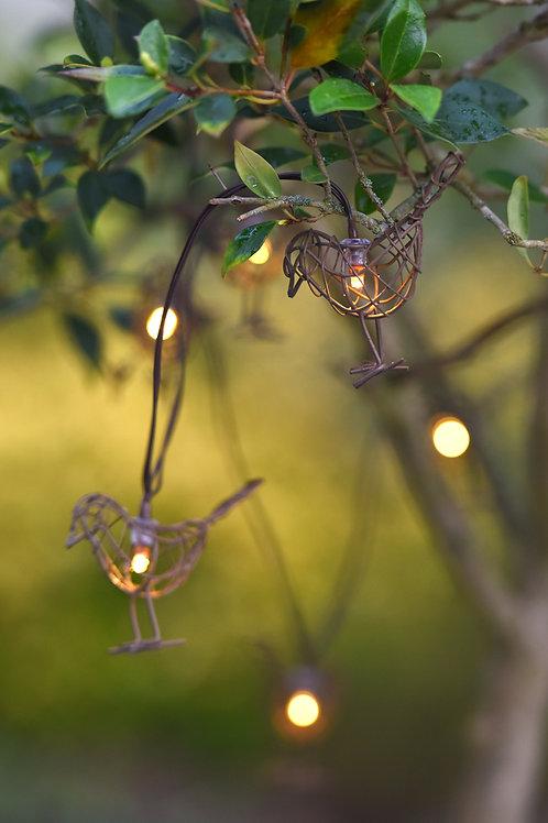 Robin Chain