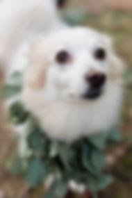 dog crown (1 of 5).jpg