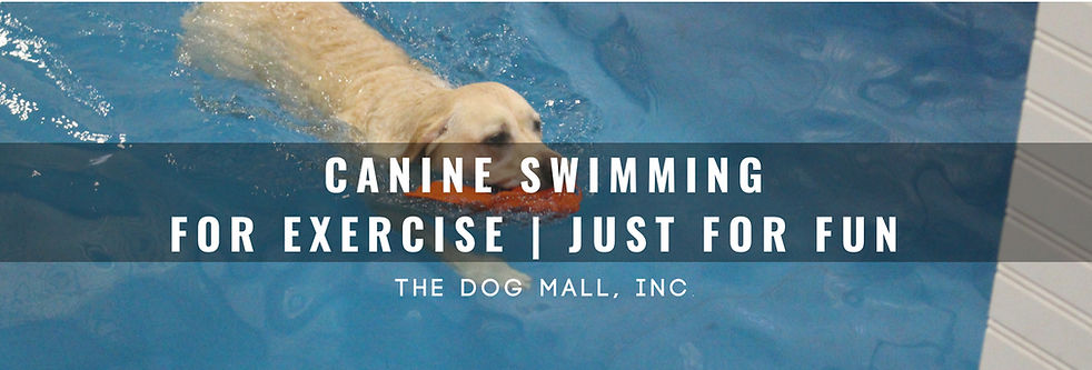 Canine Swimming.jpg