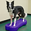 Thumbnail: FitPAWS CanineGym Giant K9FITbone
