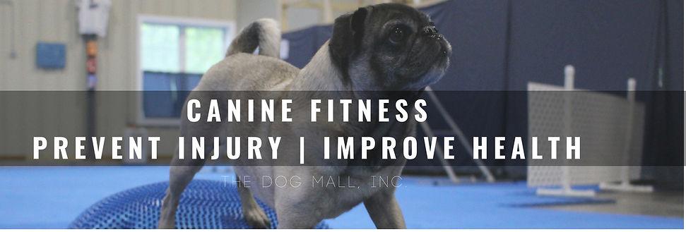 Dog Mall Fitness.jpg