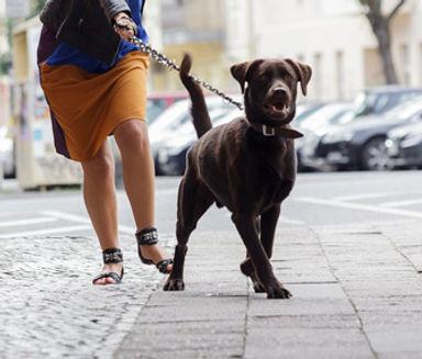dog-pulling.jpg