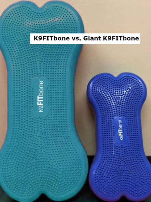 FitPAWS CanineGym Giant K9FITbone