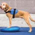 FitPAWS Balance Discs - 14 Inches