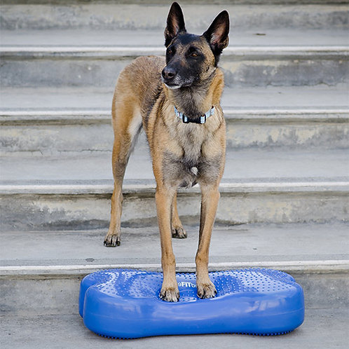 FitPAWS CanineGym K9FITbone