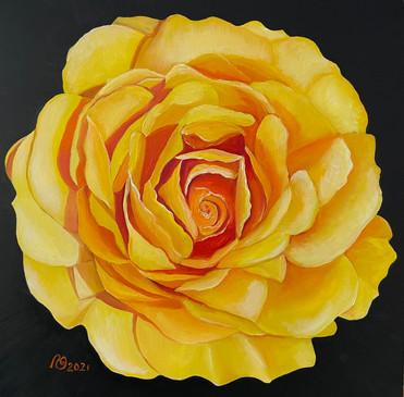 Saffron Sunshine