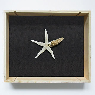 Sculpture made of starfish