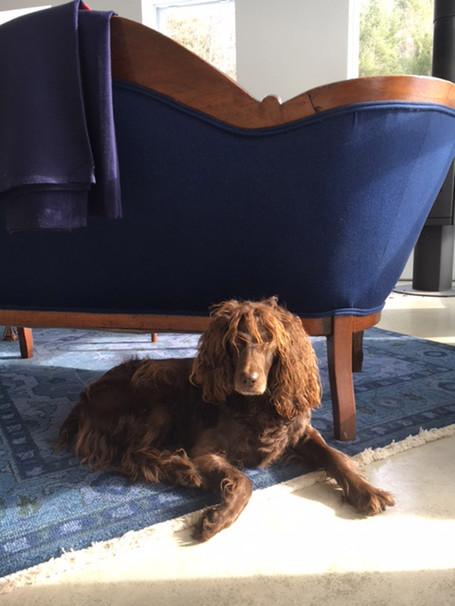 Studio dog #2, Amelia aka Roo