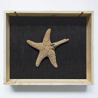 Sculpture made of starfish, deer antler