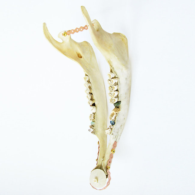 Sculpture made of horse mandible, sand dollar and copper plates