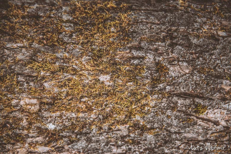 écorce de pommier et mousse