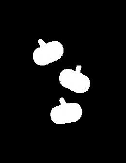 pumpkin%20png_edited.png
