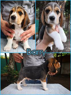 Brilliant Barry White