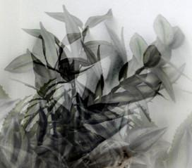 Leaves - עלים