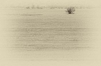 Lonely tree - עץ בודד