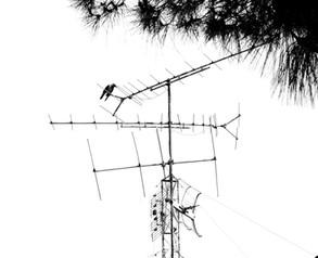 The urban tree - העץ האורבני