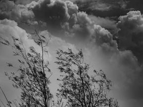 Windy day - רוח