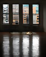 The cat - החתול