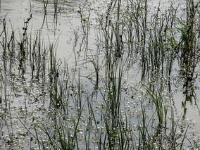The swamp - ביצה