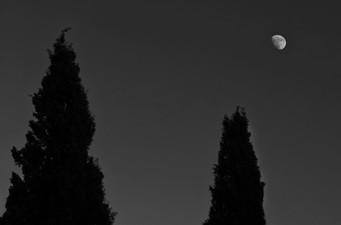 Cypress trees - ברושים