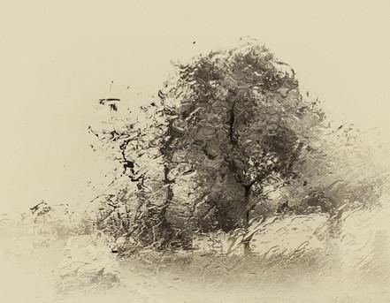 Trees - 1 - עצים