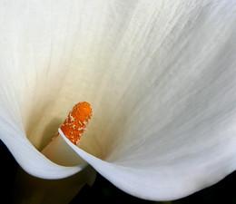 A flower - פרח