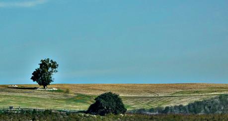 Golan Hights - 4 - רמת הגולן