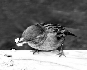 Bird in a coffee Shop - ציפור בבית קפה