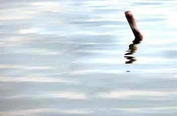 Floating wood - העץ הצף