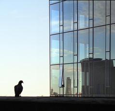 Bird and reflection - ציפור והשתקפות
