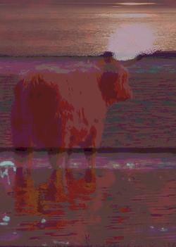 Boatyard Dreams Highland Cattle